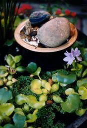 Water hyacinth...