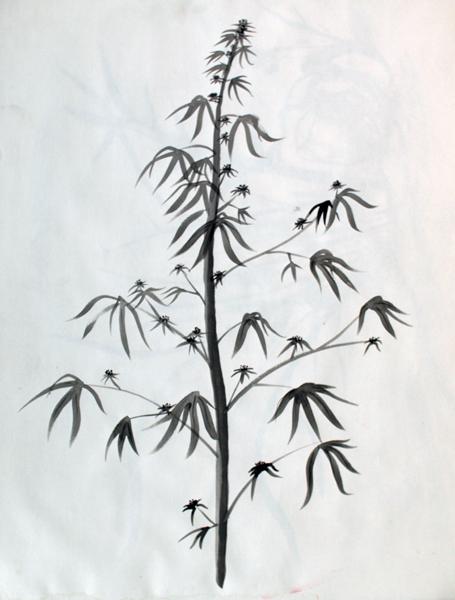 Hairloom Marijuana pencil drawing